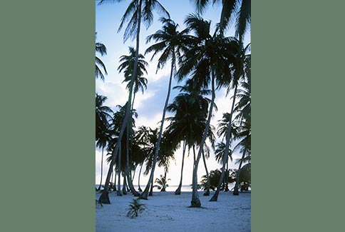 South West Key - Glover's Atoll, Belize